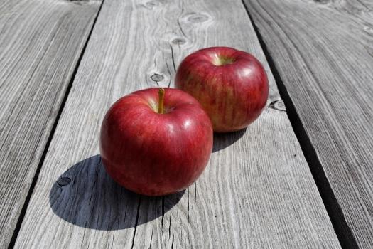 Fall harvest 11