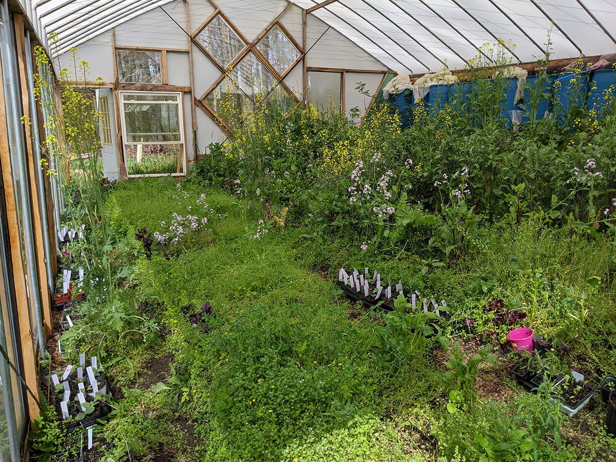 over grown greenhouse