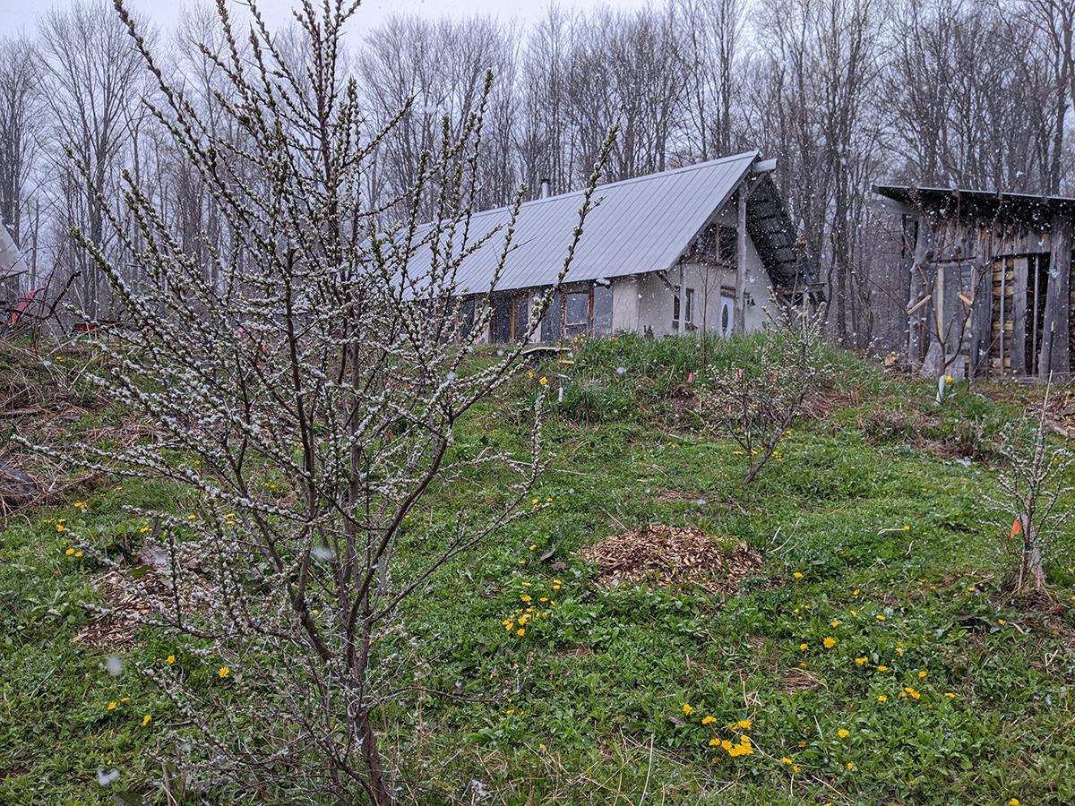 Sbowy Spring